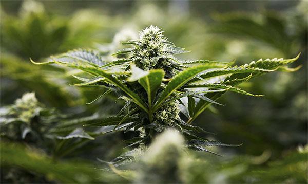 Légalisation
