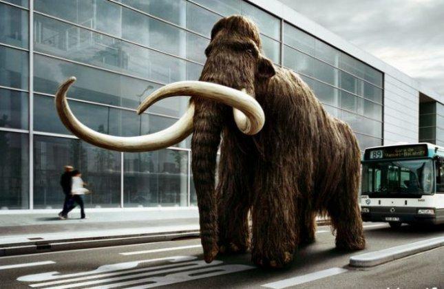 Le mammouth en marche ?